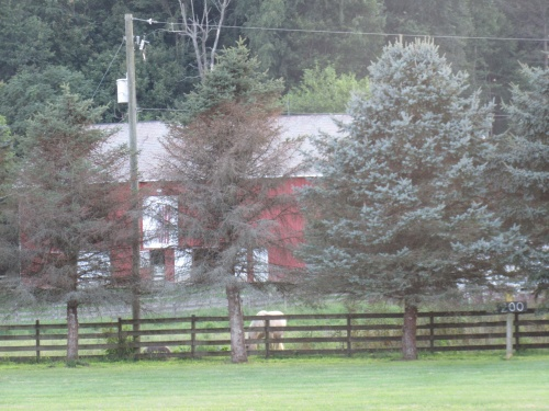 Beautiful barn with horses behind the Church