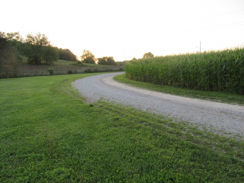 Gravel path next to our corn fields